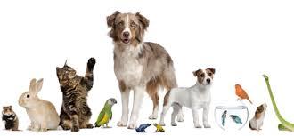 Gli Animali Domestici Comeitaliani